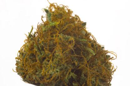 Jamaican Grape