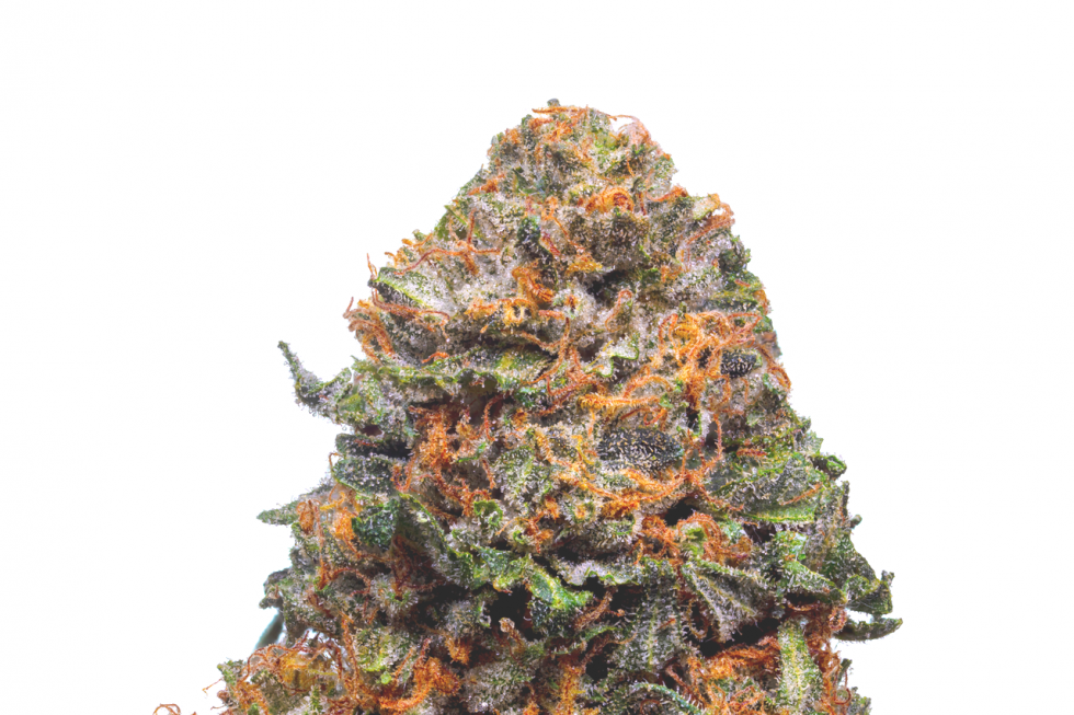 Pink Kush Strain, secrets of the pink kush