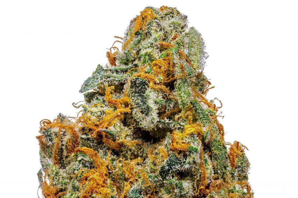 Organic King Tut Strain