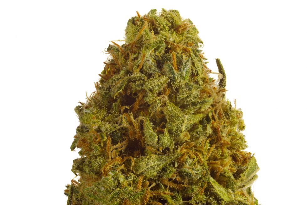 Blue Dream Sativa Weed Strain