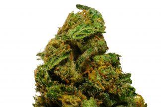 Cinderella 99 cannabis sativa strain